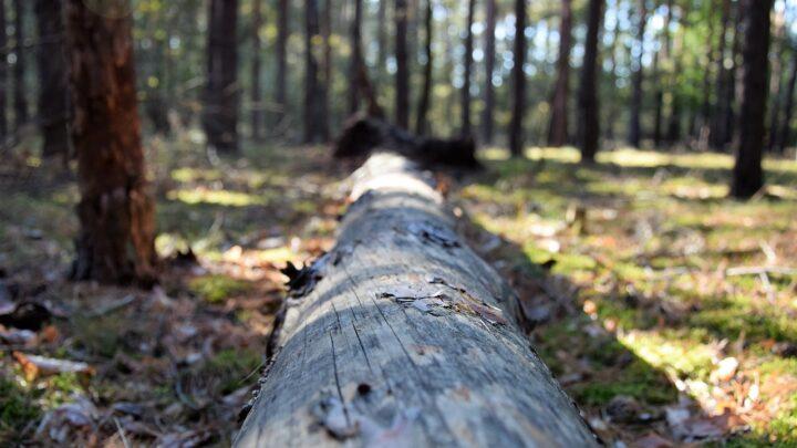 Napad na kobietę – co wydarzyło się w lesie?